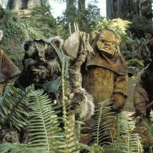 Team Page: The Ewok-ers